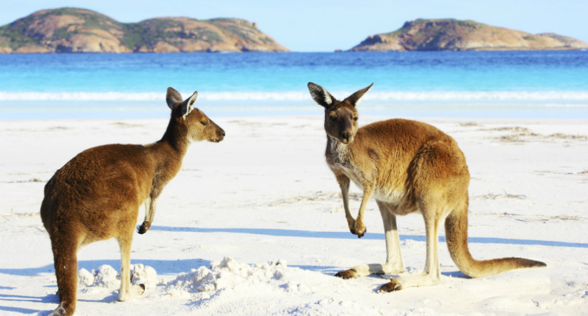 Australia's Best Wildlife Shore Excursions