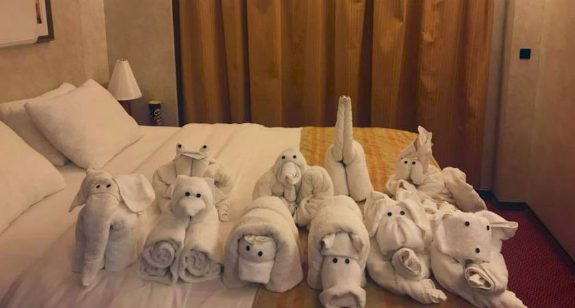 Quiz: Which Towel Animal Are You?