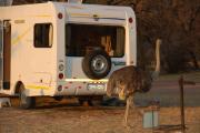 Bobo Campers ZA Discoverer 4 - Auto motorhome rental south africa