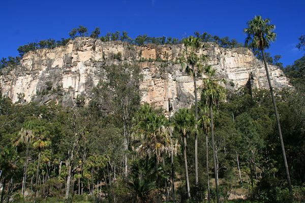 Trees reach toward the sky in front of a craggy cliff in Carnarvon National Park