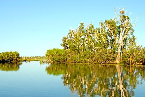 Trees reflect on the swamp waters of Kakadu National Park in Australia
