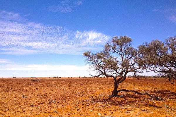A lone tree stands in the arid Simpson Desert in South Australia