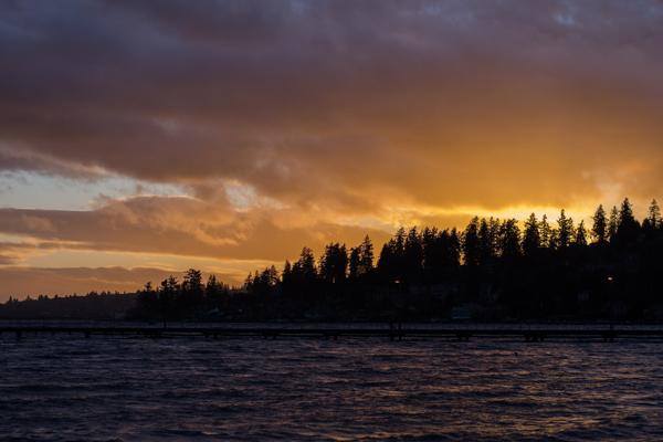 The trees of Juanita Beach Park glow orange during sunset near Bellevue, Washington