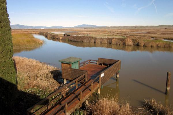 A dock stands empty on the banks of Suisun Marsh near Fairfield, California