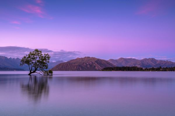 Lonely Tree in Lake Wanaka, New Zealand