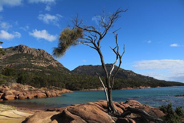 A tree stands in the centre of a beautiful landscape in Freycinet National Park, Tasmania